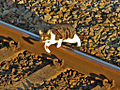 A cat crossing the Down Main line at Castleton East Junction.jpg
