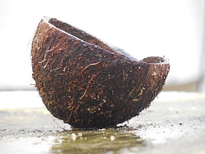 Coconut - A cut coconut shell