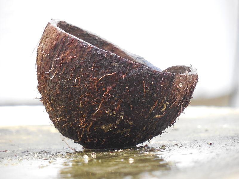 File:A cut coconut shell.JPG