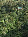 A house amid of the forest near jog falls.jpg