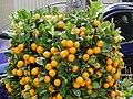 A tangerine in the village.jpg