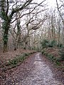 A track through the woods - geograph.org.uk - 1085325.jpg