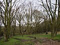 Abbey Wood - geograph.org.uk - 911416.jpg