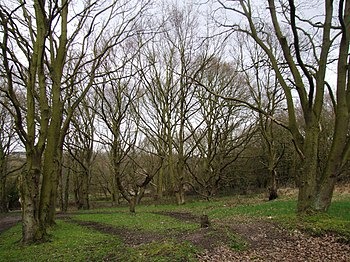 English: Abbey Wood There is a large stream at...