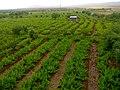 Abhar-farm - panoramio (1).jpg