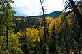 Abineau Trail is a steep 1,800 foot climb over two miles up the slopes of the San Francisco Peaks through Abineau Canyon. The trail meets the Waterline Trail at the top, which can be followed down to (22046707052).jpg