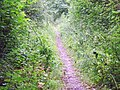 Ackling Dyke near Monkton up Wimborne - geograph.org.uk - 1433998.jpg