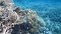 Agincourt Reef, Great Barrier Reef, Queensland (483799) (9440773711).jpg