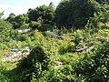 Allotments in Headington - geograph.org.uk - 1399518.jpg