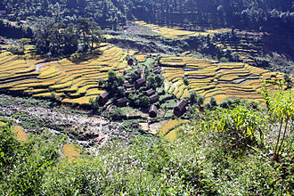 Rukum District - Irrigated rice cultivation around a small village in Rukum, Nepal.