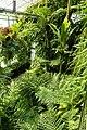 Alten Botanischen Garten Göttingen kz03.jpg