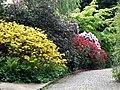 Alter Botanischer Garten Kiel Rhododendron1.jpg
