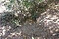 Alto Araguaia - State of Mato Grosso, Brazil - panoramio (245).jpg