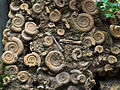 Ammoniten-9133162-PS.jpg
