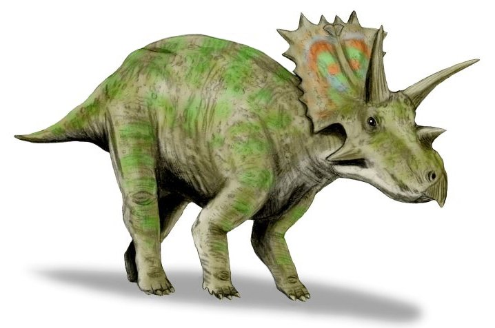 Anchiceratops BW
