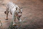 Animais do Zoo passam por exames periódicos (33895083535).jpg