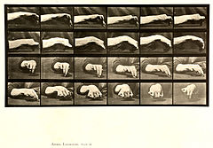 Animal locomotion. Plate 532 (Boston Public Library).jpg