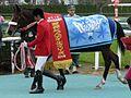 Apapane-horse-3.jpg