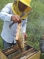 Apicultura en la selva central - Satipo.jpg
