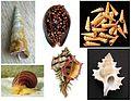 Apogastropoda various 3.jpg