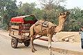 Approach to Taj Mahal (22587261603).jpg