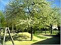 April Parc Natural Freiburg Germany - Master Landscape Rhine Valley Photography 2014 Landgut Mundenhof - panoramio (23).jpg