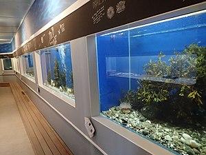 FSC Millport - Aquarium in the Robertson Museum and Aquarium at FSC Millport