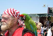Ara militaris -pirate festival (2007)-8a.jpg