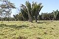 Araguainha - State of Mato Grosso, Brazil - panoramio (112).jpg