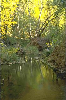 Aravaipa Creek river in the United States of America