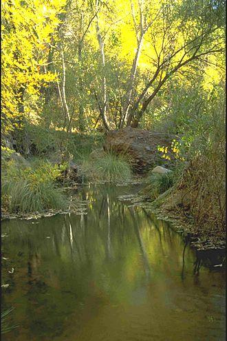Aravaipa Canyon Wilderness - Fall colors near the western end of Aravaipa Canyon