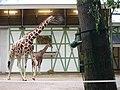Artis Zoo, Amsterdam (7621068094).jpg