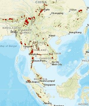 AsianGoldenCat distribution.jpg