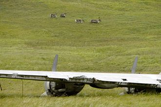 Atka Island - Atka Island reindeer and World War II aircraft