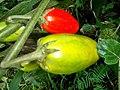 Aubergine africaine.jpg