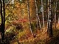 Automn hills - panoramio.jpg