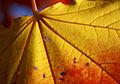 Autumn details (3999937693).jpg