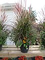 Autumn grass planter (6163938689).jpg
