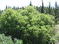 Avshalom's Cave IMG 0981.JPG