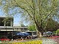Bad Krozingen - Park - Restaurant - panoramio - Baden de (1).jpg