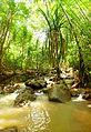 Bamboos - panoramio.jpg