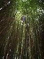 Banho de Natureza - Ribeira de Elos, Portugal.jpg