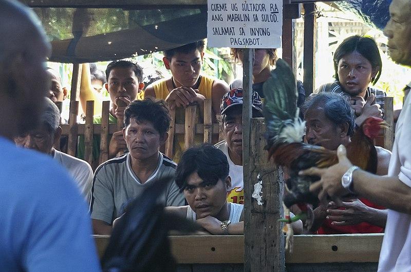 File:Barangay-Bulacao Cebu-City Philippines Cockfighting