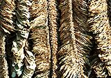 Basma-tobacco-drying.jpg