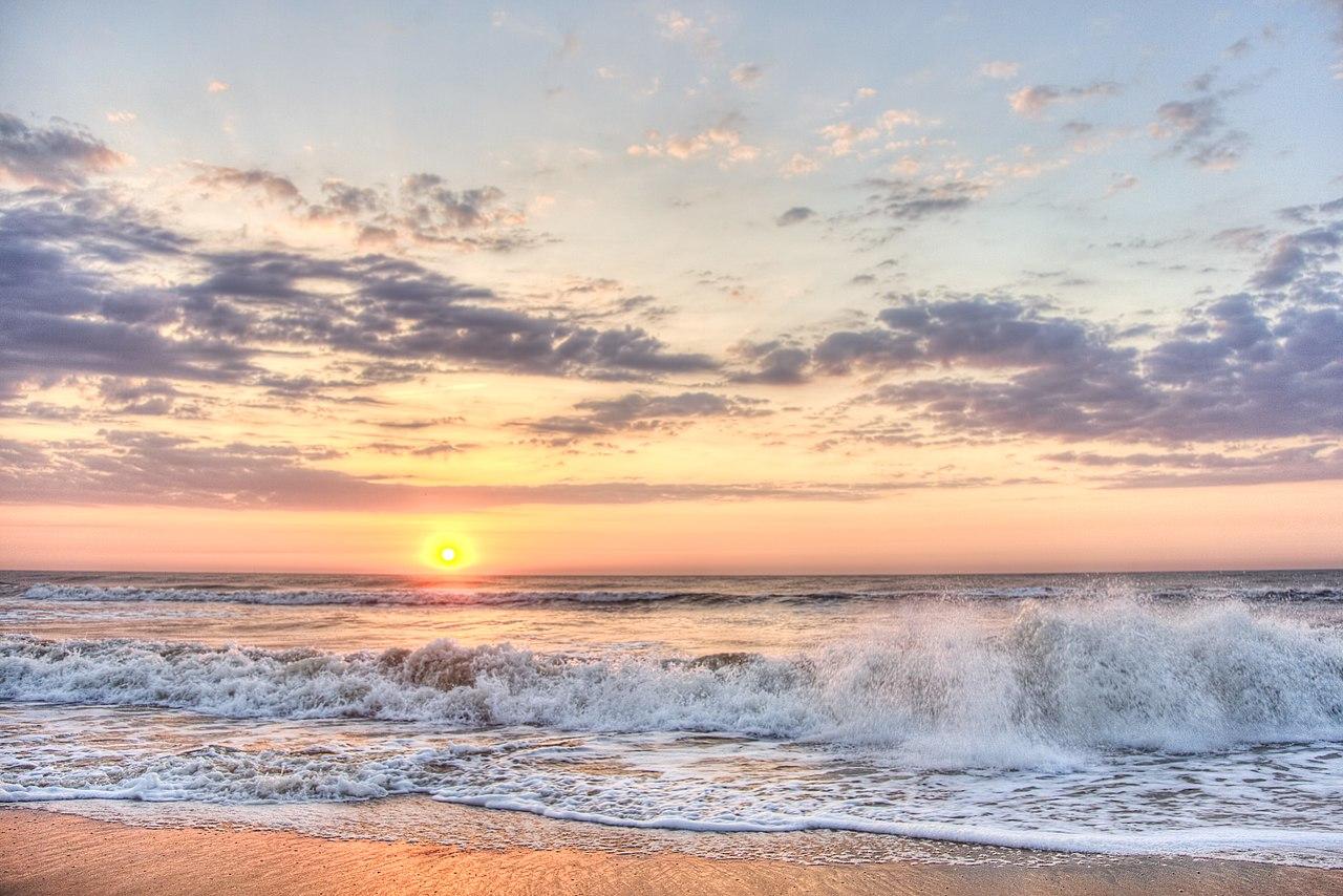 Virginia Beach Sea Dog Laboradors