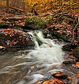 Beartown Woods Natural Area (10) (8132857624).jpg