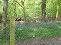 Bedfords Park, Havering-atte-Bower - geograph.org.uk - 408247.jpg