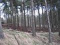 Beecraigs Woods - geograph.org.uk - 1175845.jpg