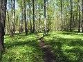 Bezhitskiy rayon, Bryansk, Bryanskaya oblast', Russia - panoramio (159).jpg