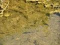 Bigar potok63.JPG